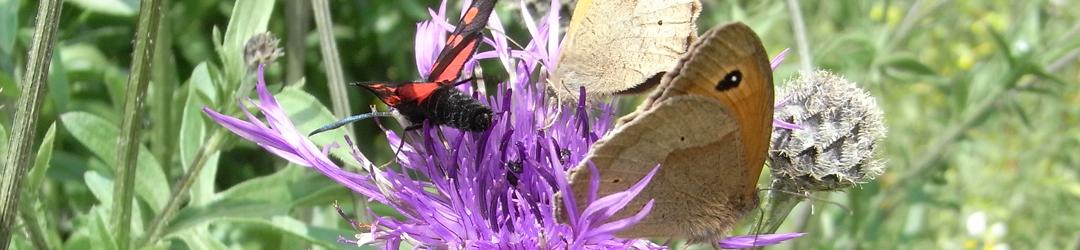 butterflies on a flower