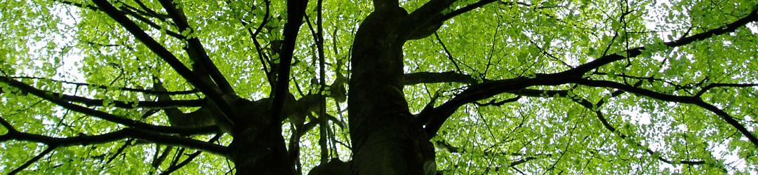 View into a tree camopy